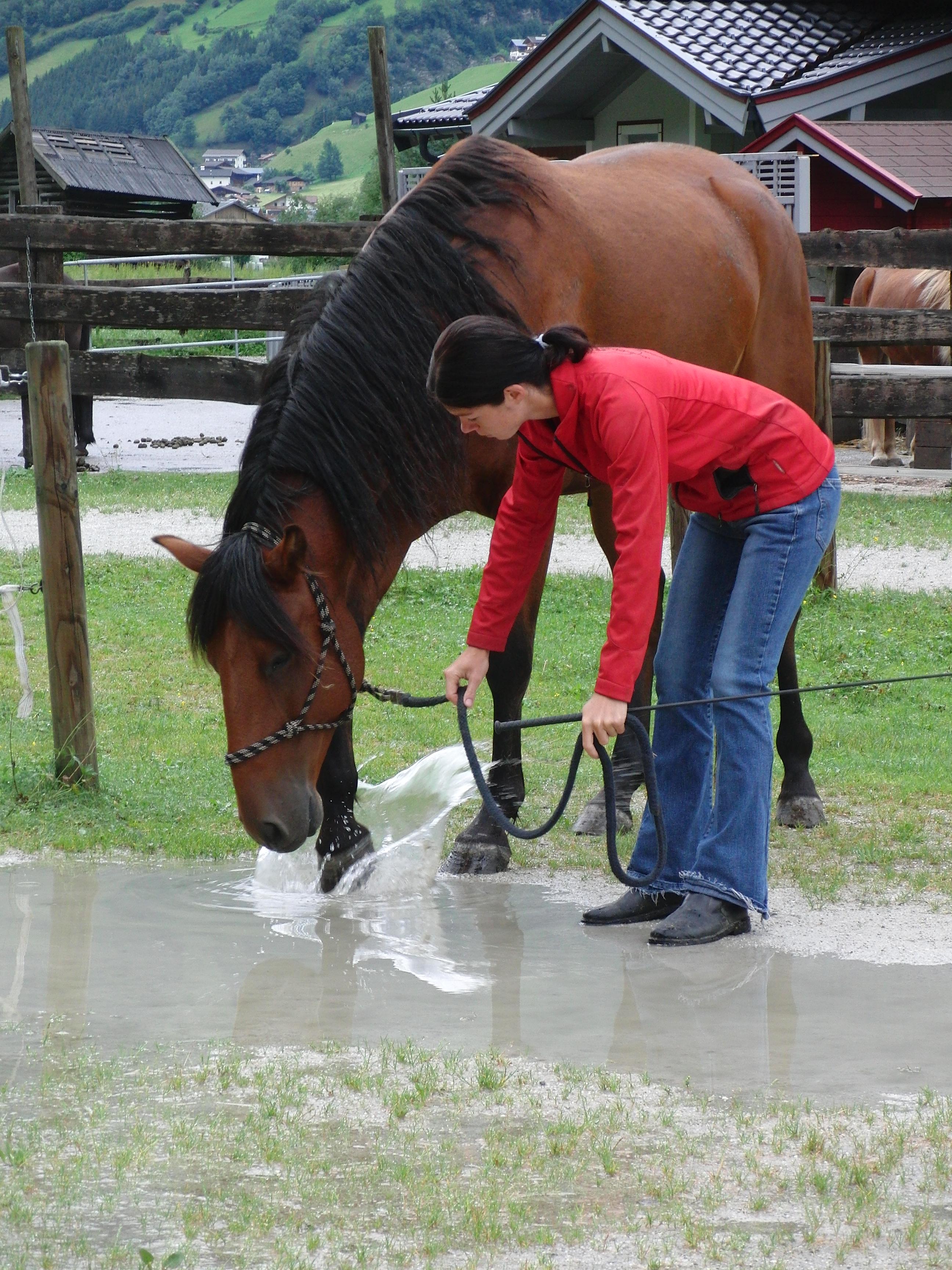 für ausreichende Trinkwasserversorgung bei der Pferdefütterung sorgen