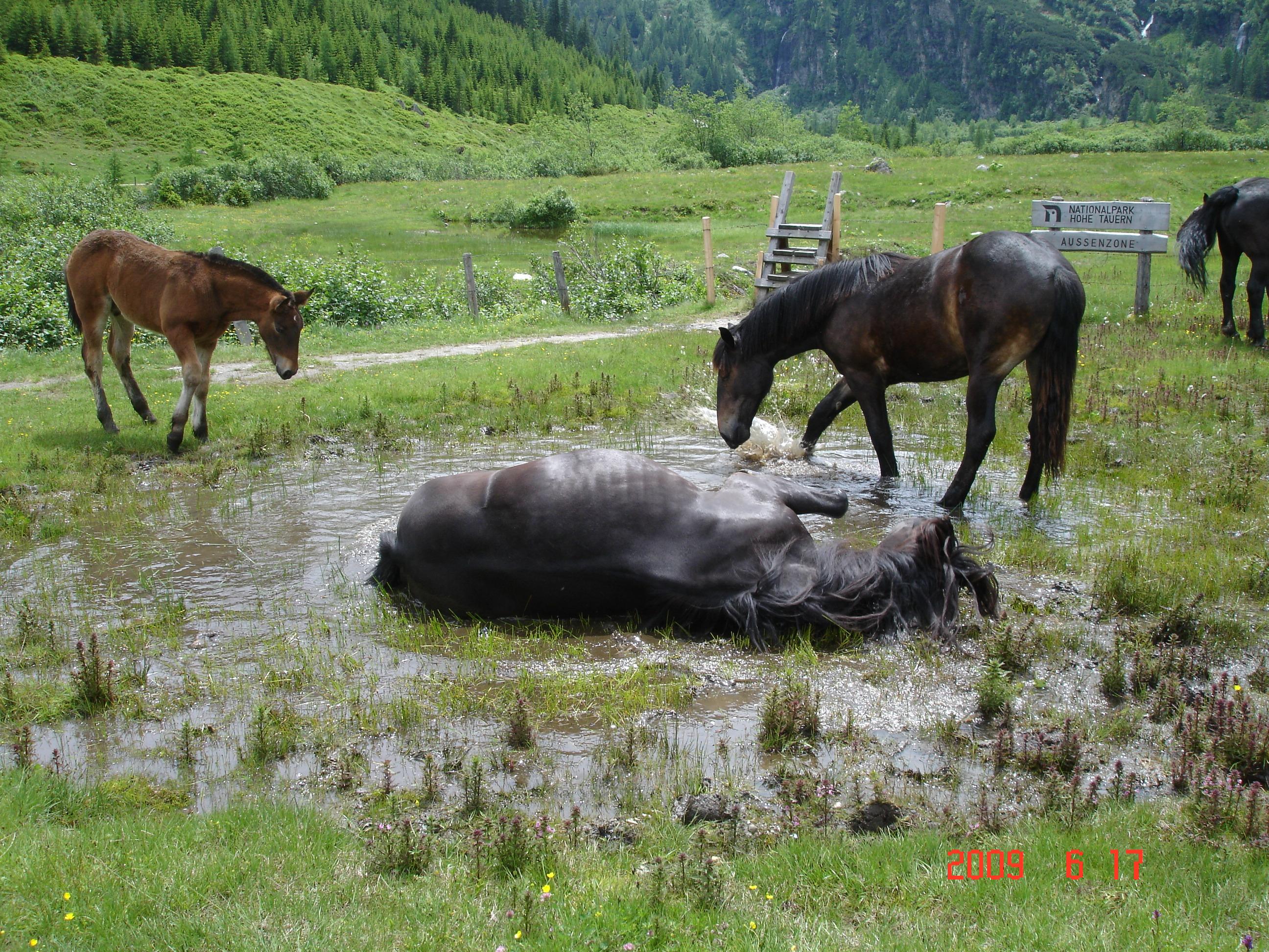 Pferde brauchen Wasser