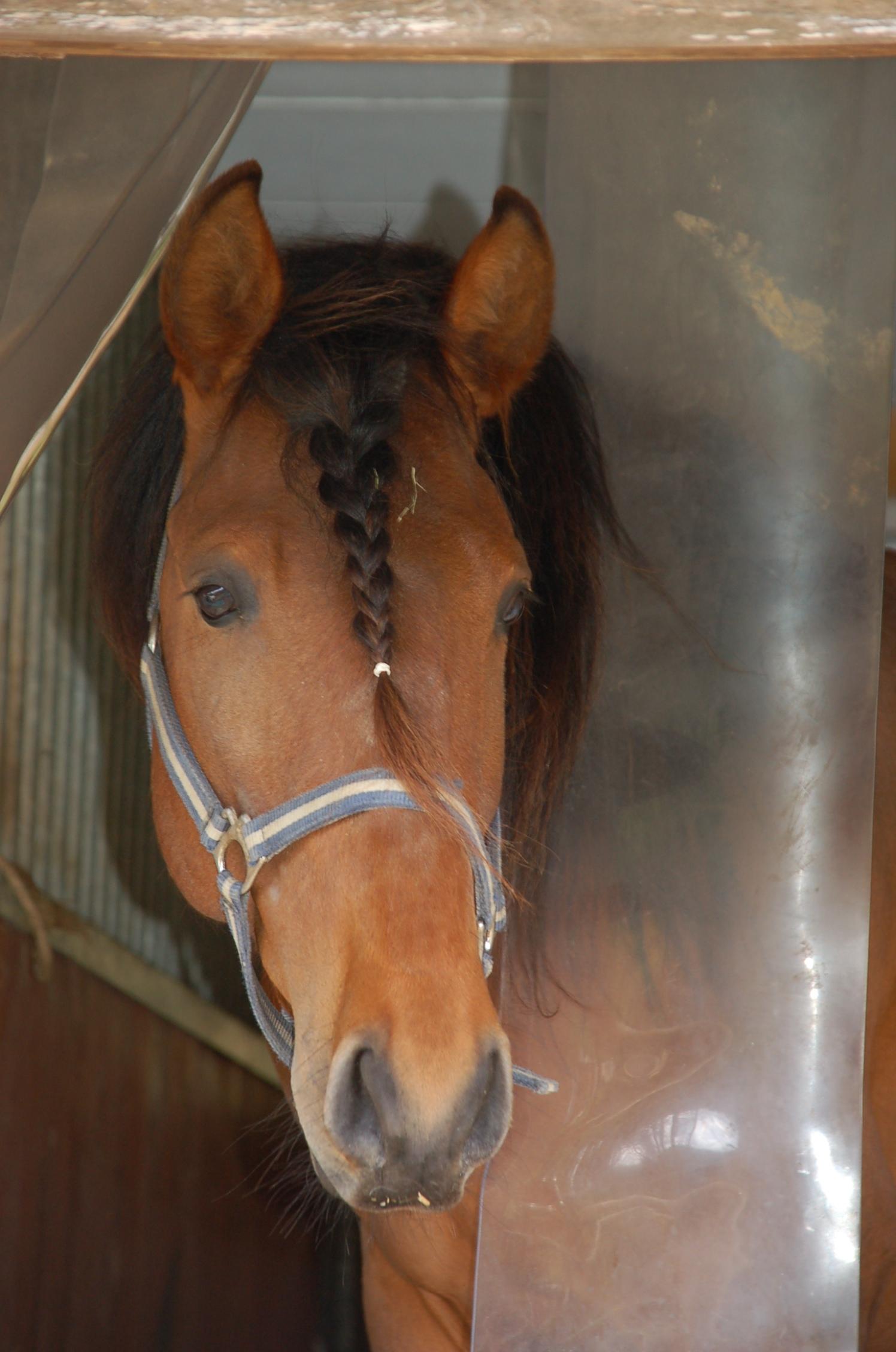 Pferde vor Fliegen und Bremsen schützen - der richtige Insektenschutz