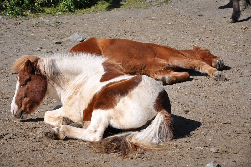 Frühjahrsmüdigkeit und Fellwechsel beim Pferd