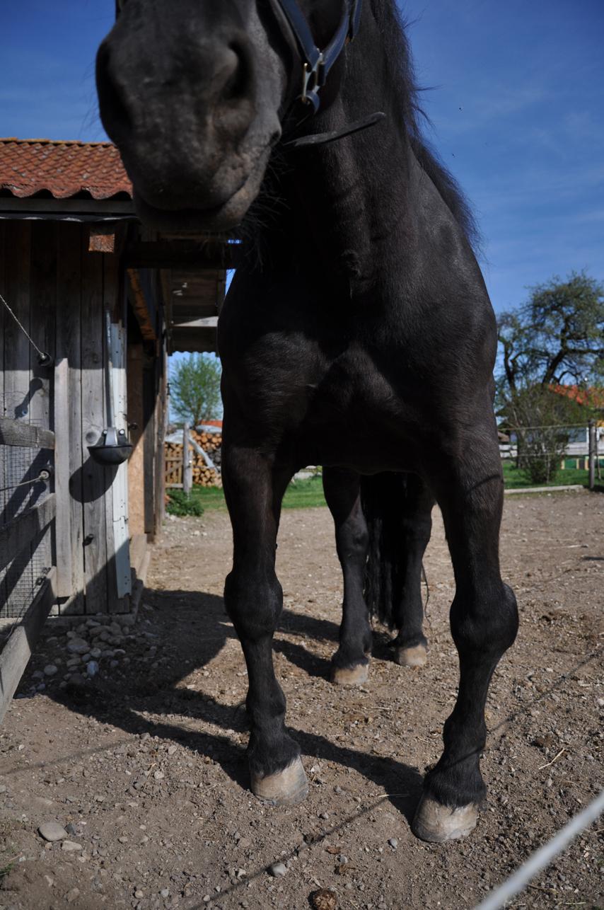 Mangelernährung beim Pferd