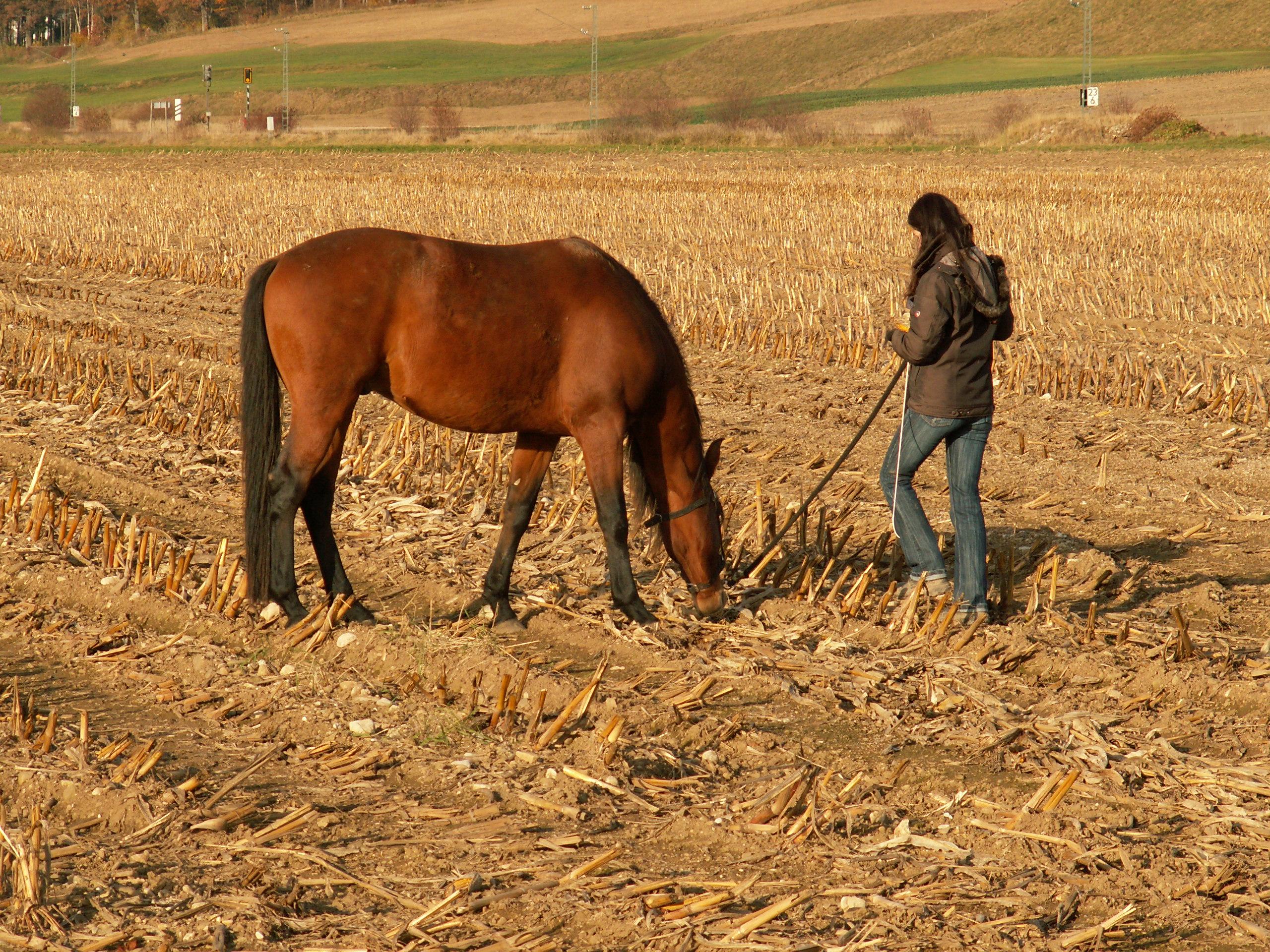 Mit dem Pferd spazieren gehen. Durch gemeinsame Spaziergänge Pferd-Mensch-Beziehung stärken