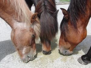 Pferdehanf Zusatzfutter