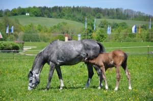 Warum Pferdehanf - bei hohen Belastungen sowie einseitigem Nahrungsangebot, empfehlen wir Pferdehanf als Zusatzfutter