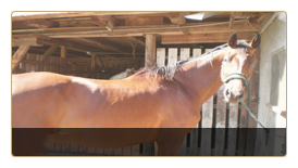 stoffwechsel-pferdehanf